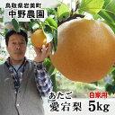中野農園【あたご梨】5kgセット(自家用:5-12玉入り)【...
