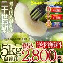 """※こちらは複数購入してもプレゼントは付きません。【商品について】鳥取県の""""秋""""の味覚!! 『二十世紀梨』。8月29日付楽天ランキング1位獲得この商品についてこの商品は、スレ傷や変形がある梨です。中には氷被害のものも混じります。 ただし、味は贈答用の梨と全く変わりません!!【内容量】:5キロ(12-18玉) ※生産地:鳥取県 販売者:株式会社 フォーシーズン 鳥取県岩美郡岩美町浦富2475-58 ※写真はあくまでイメージで、実際とは異なります。【賞味期限】涼しい場所で保存下さい。※生ものですのでできる限りお早めにお召し上がりください。 【お召し上がり方】冷やして食べると更においしくいただけます。食べる時は酸味のある芯を大きく取り除きます。芯の酸味をさけ、梨のおいしさだけを浮き立たせるためです。大皿に盛り付けて出す時は、うすい塩水か、酢を少し加えた水にさっと通すといつまでも白さを保つことができます。さらに、甘みが塩分や酸味で引き立ちます。【お支払い方法】 代金引換・クレジット【お届け方法】★この商品は佐川急便もしくはクロネコヤマト便でのお届けとなります。(常温便)【同梱可能商品】※この商品は、二十世紀梨・のみ同梱をお伺いいたしております。 その旨ご了承下さい。【同梱不可商品】※この商品は、二十世紀梨以外の商品との同梱はお伺いすることが出来ませんので、その旨ご了承下さい。(配達便が異なりますので、ご一緒にご注文いただいた場合にも、それぞれに送料がかかる場合がございます。【希望出荷予定日について】※この商品は予約販売となります。9月上旬の収穫があり次第の発送となります。ただし、収穫(入荷)の状況等により、ご希望日での出荷期間中の出荷が難しい場合がございます。その旨ご了承ください。※天候・交通等の影響により、ご指定日時にお届けできない場合がございます。【備考】 ギフト/お中元/お歳暮/父の日/母の日/敬老の日/クリスマスギフトなどにどうぞ。 二十世紀梨,和梨,20世紀なし,20世紀梨,鳥取県,フォーシーズン,旬のさかな,なし,梨,青梨,【楽ギフ_のし】今年も人気! 鳥取県産【二十世紀梨】 今なら 店内ポイント10倍! おいしい梨は、やはり土壌が豊かで根が元気でなければいけません。おいしい二十世紀梨を作るには、なんと言っても土作りが大切。そのため、収穫が終わった秋に梨園内を耕したり夏場に集めていた山草等の有機物や独自の肥料をしっかり入れます。 日当たりをよくし、一枝、一芽を吟味して樹形を整えます。秋に入ると、梨の木の葉は紅葉して落葉し、剪定作業が始まります。剪定は、梨作りの3割方が決まるといわれる大事な作業で、ここで、職人の腕の見せどころ。長年の経験と勘、技を必要とします。枝は、春になると新芽を吹き花を咲かせます。 この時、大きな二十世紀梨が実るように芽数を制限します。剪定された枝は、鉄線の棚に結びつけてしっかり固定します。 二十世紀梨は自家受粉しないため、実をならせる為には他の梨品種の花粉を一つ一つ人手によって授粉し、実をならせます。4月中旬、枝の花芽の一つ一つから8〜10個の白い花が咲きます。 形の良い、太る幼果だけを残して摘み取ります。5月のゴールデンウィークの頃、授粉した二十世紀梨は実を膨らませ、ビー玉くらいの大きさになります。欲張って幼果をたくさん残すと、小さな果実となり樹を弱わらせてしまします。そのために、幼果を摘み落とし、果実の数を調整します。まだ小さい幼果から収穫時の果実の姿を予測して、形が良く、大きく、綺麗な実となるものだけを残します。あと果樹園にはに草が生えていますが、実はこの雑草が梨にとってすごくよい働きをしてくれるのです。もちろん雑草をそのままにしておくと伸び放題で梨の木の養分が吸いとられてしまいますが、土壌の有機質化・水分保全・ハダニ類の抑制等様々な役割をしております。 8月下旬になると、二十世紀梨の実が熟します。成熟した二十世紀梨を一つ一つ丁寧に収穫していきます。収穫した二十世紀梨は病気、傷はないか、形はどうか一つ一つを確認し、作業はすべて手作業です。 一部をご紹介させて頂きました。 沢山のレビューを頂きありがとうございます。 【鳥取県産】二十世紀梨 味は進物用と同等の訳あり 5kg(12-18玉)セットが こちらの商品は9月上旬以降 収穫があり次第に発送です。 ★その他の人気梨★"""