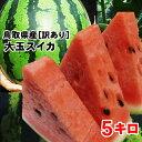 送料無料![訳あり]河本農園スイカ(1玉5kg程度)(M)[...