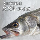 送料無料【スピード出荷】鳥取県産 スズキ[生] 1匹(4kg前後)【お刺身・ムニエル♪】