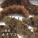 【スピード出荷】【鳥取県産】(寒なまこ)赤ナマコ海鼠[活生] 1kg詰め込みセット(2-4匹程度入り)【酢の物に♪】