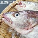 【スピード出荷】山陰沖産マダラ(真鱈)[生] 1匹(1.1kg前後)【ムニエル・タラチリ鍋に♪】