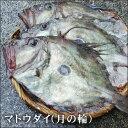 送料無料【スピード出荷】鳥取県産 マトウダイ(月の輪)[生]大 1匹(1.2kg前後)【焼き物
