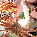 【スピード出荷】若松葉ガニ[活生][足折れ混じり]  1枚(400-500g前後)【お刺身・茹で蟹♪】