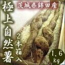 自然薯(じねんじょ)2本入約1.6kg 茨城県鉾田市産