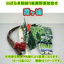 茨城朝採り野菜セット「霞ヶ浦」【楽ギフ_メッセ入力】