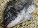 【送料無料】ふわふわ釜揚げしらす1kg愛知県日間賀島産たっぷり1kg