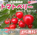 プレミアムミニトマトバラ