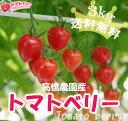 【送料無料】完熟トマトベリー(ミニトマト)A品入りの無選別(3kg)【特別栽培・減農薬