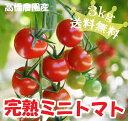 【送料無料】高橋さんちの完熟ミニトマト 3kg【特別栽培・減農薬・減化学肥料】(CF小