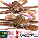 訳あり 足取れ1本【活蟹】生 松葉ガニ 姿 (ズワイガニ) ...