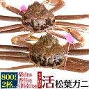 【活蟹】生 松葉ガニ 姿 (ズワイガニ) 【800g前後×2...