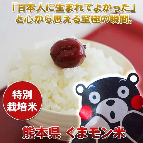 【定期購入12ヶ月】熊本産くまモン米5キロ