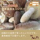 愛媛県産 肉厚 菌床 生しいたけ バラ1kg お買い得品【送...
