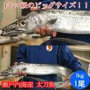 太刀魚 1kg(山口県周防大島産もしくは長崎のブランド五島太刀 ) ( 釣り たちうお タチウオ お刺身 )