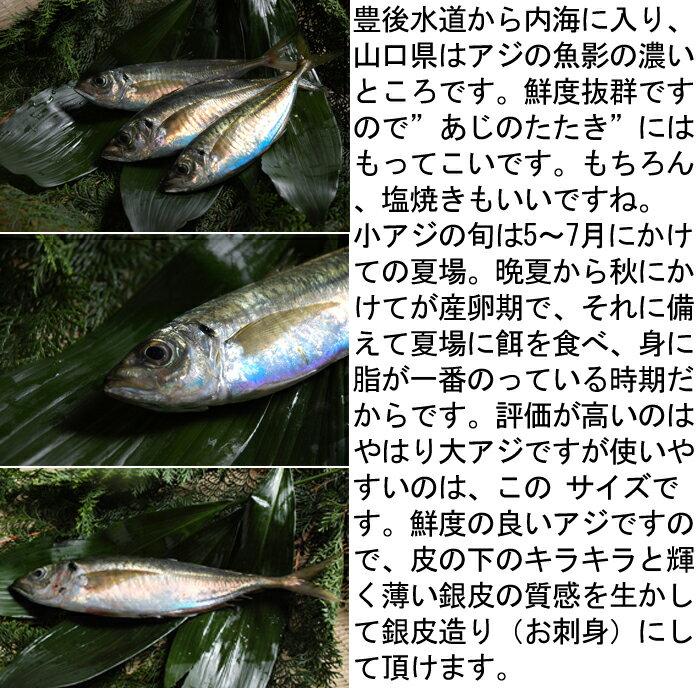 アジ 瀬戸内海産 Sサイズ(130〜150g)...の紹介画像3