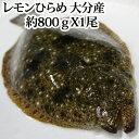 【#元気いただきますプロジェクト】レモンひらめ 800g 大分県産 ( 平目 ヒラメ 養殖 フルーツ魚 レモン 刺身 )
