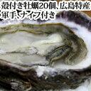 送料無料 広島特産「 かき小町 」