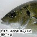 瀬戸内海産 しまあじ (養殖)1kg( シマアジ 沖アジ )