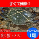 活き締め 渡り蟹 メス( ワタリガニ ガザミ )1ぱい(500〜600g) 瀬戸内海産