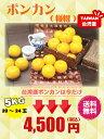 御歳暮 台湾 ポンカン 5kg(2L〜3Lサイズ)【期間限定・送料無料】