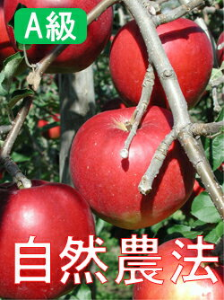 Houzumi organic farms natural farming apples of Tsugaru < 5 kg] * shipping for the and other products cannot be shipped, plus shipping costs, and.