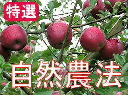 Houzumi's natural farming apples Apple [about 4.5 kg]