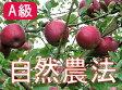 【A級品】竹嶋有機農園の自然農法りんご紅玉 <約9kg>【送料込・同梱不可】