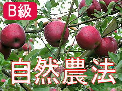Houzumi's natural farming apples Apple [about 14 kg (packed 3 )] * wake there, scratching, household