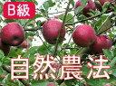 【B級品】竹嶋有機農園の自然農法りんご紅玉 <約14kg(3段詰め)>※ワケあり・傷あり 家庭用 【