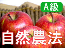 Houzumi's natural farming apples Fuji [15 kg (packed 3 )].
