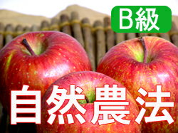 Houzumi's natural farming apples Fuji [15 kg (packed 3-stage > * wake wound and is the home