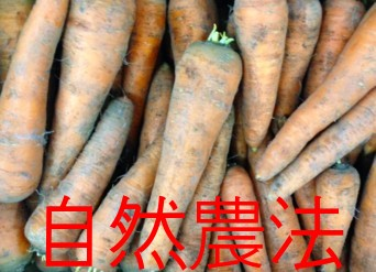 Organic or natural farming carrots approx. 3 kg