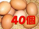 【常温便送料込/一部地域別途】太陽食品の平飼い有精卵★「たいようの幸せたまご」40個