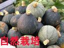 【青森県産】自然栽培のかぼちゃ 約800g~1kg※木村秋則さんに自然栽培を学んで作った南瓜です。(農薬・肥料不使用)