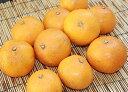 【★4/14以降発送】★自然農法 興津(おきつ)さんの清見オレンジ 約2kg (サイズ混合)