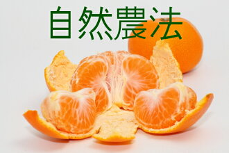Joe Qingdao oranges 1 kg * size mixture