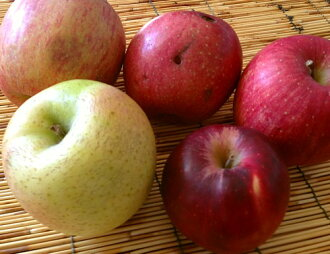 Houzumi's natural farming apples of approx. 1 kg