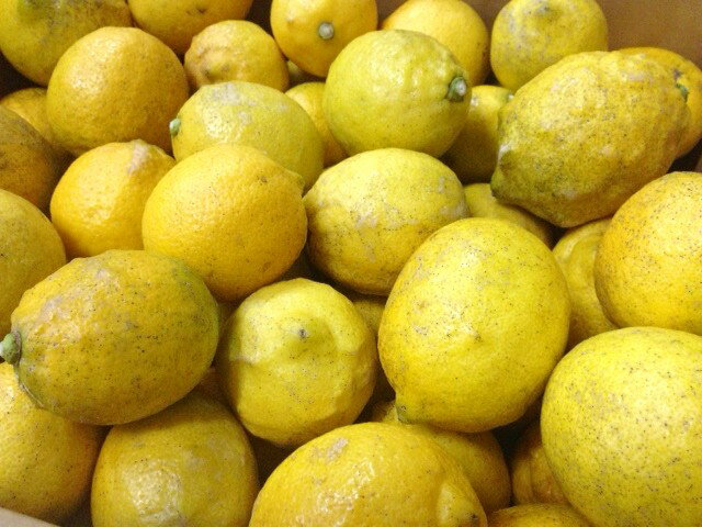 Organic cultivation ★ Izumi lemon 2 kg * translation and products