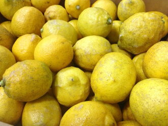 Organic spring Mr. lemons (domestic) 2 kg * B grade products ( skin sores and blotches are )