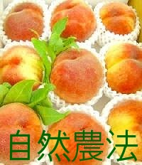 Mr. Nakazawa sharing his miracle peach 5 kg ★ ships late July-early August (non-specified) * chemical pesticides and chemical fertilizers free
