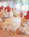 山口県産【秋川牧園の安心若鶏】 ささみ 200g 【冷凍】