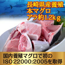 長崎県産 養殖 本マグロ アラ 約1.2k お刺身に取れる  大変お得な部位です 本マグロの頭 カマ部分を使用