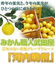 河内晩柑「加工向き」ジュース用10kg【北海道 沖縄は別途1箱500円】