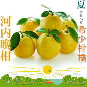 河内晩柑「小粒っ子」訳あり10kg小玉サイズ、入数50〜70個