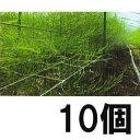 アスパラネット 15cm網目×4目×長さ100m 白 10個 [アスパラガス]【smtb-ms】