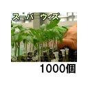 接木ホルダー スーパーウィズ 1000個入 ※14号、17号、20号、23号からお選びください
