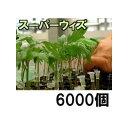 接木ホルダー スーパーウィズ 6000個入(1000個入×6袋)※14号、17号、20号、23号からお選びください 【smtb-ms】
