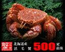 北海道産・活毛蟹500g前後×1尾【楽ギフ_のし】【活カニ】【お買い得】
