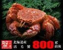 【特大】北海道産・活毛蟹800g前後×1尾【楽ギフ_のし】【活カニ】【お買い得】